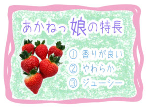 あかねっ娘は香りが良く果肉の柔らかいジューシーなイチゴです。